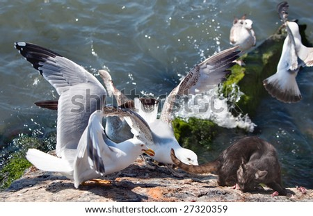 Seagulls and cat sharing a fish - stock photo