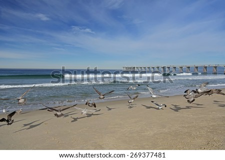 Seagulls and pier on the Hermosa beach, California, USA  - stock photo