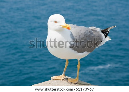 Seagulls are birds in the family Laridae - stock photo