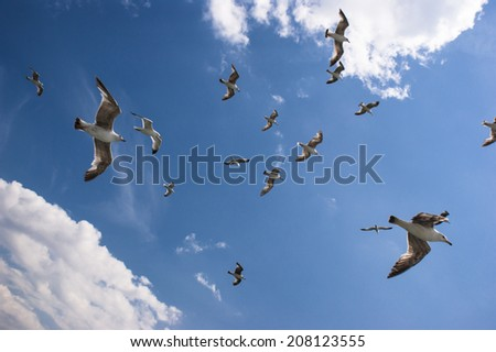 Seagulls are flyijng on sky  - stock photo