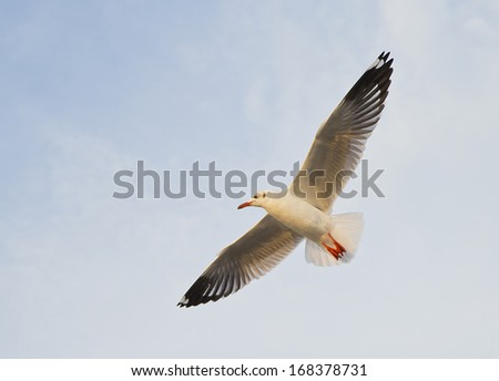 Seagulls are flying, beautiful nature of Thailand.