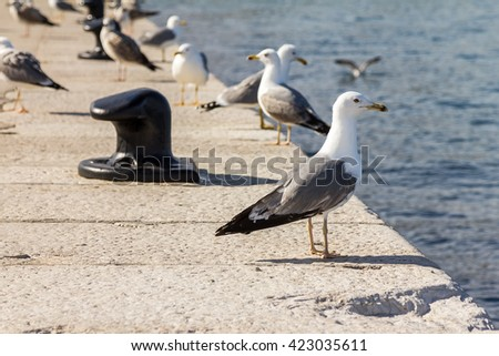Seagulls are standing on the edge of the harbor.
