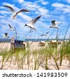 seagulls at the beach in summer, beach chairs on White sand beach with grass and blue sky at Baltic sea - stock photo