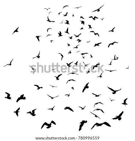seagulls black silhouette on isolated white background illustration