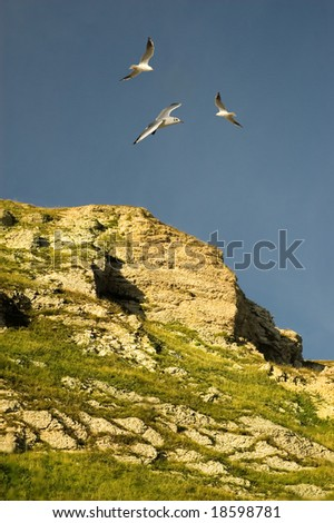 Seagulls flying above a rockface.