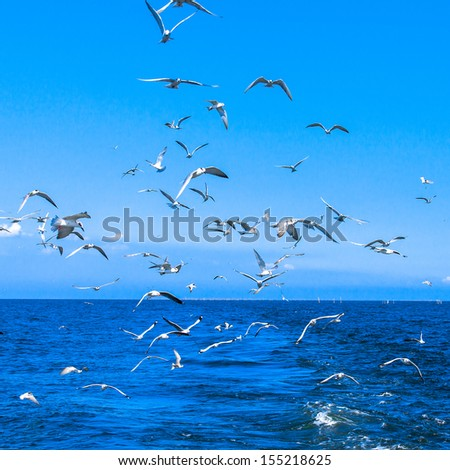 seagulls flying after speed boat in gulf of thailand - stock photo