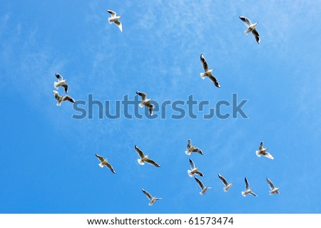 Seagulls flying against a blue sky - stock photo