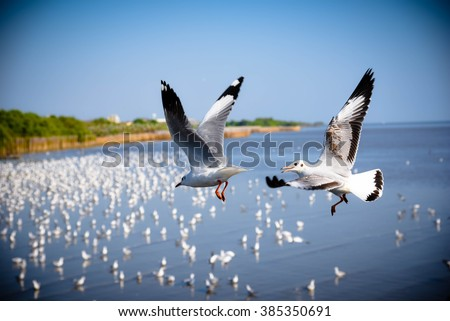 Seagulls flying by selective-focus and vignette - stock photo