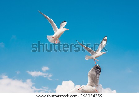 Seagulls flying in blue sky at Bangpu, Thailand