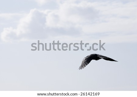 seagulls flying in the blue sky - stock photo