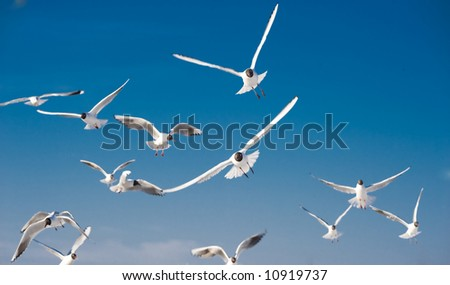 Seagulls flying in the blue sky - focus is on the central bird - stock photo