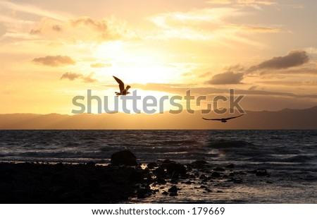 Seagulls flying into the Sunset, Coromandel Penninsula, New Zealand