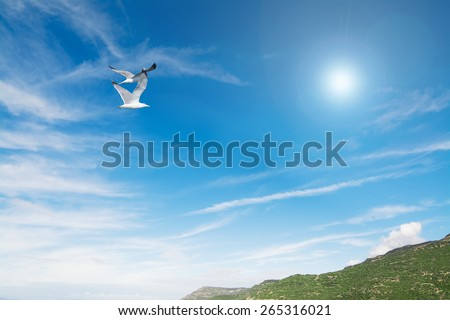 seagulls flying over a green hill  - stock photo