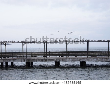 Seagulls flying over the Black Sea. Pierce in Kerch