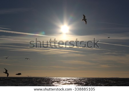 Seagulls flying over the sea at sunset time