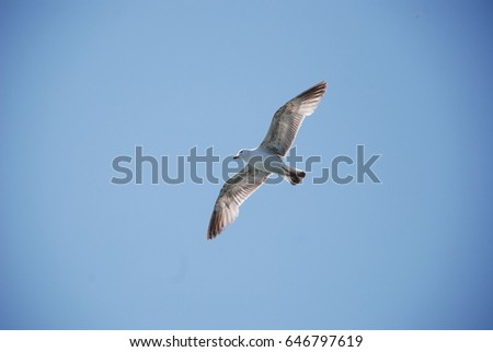 Seagulls flying over the sea blue sky