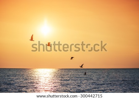 Seagulls Flying over the Sea, sunrise shot