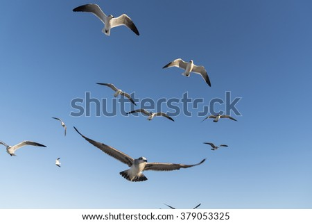 Seagulls flying under the blue sky in the sunny day, Miami beach - stock photo