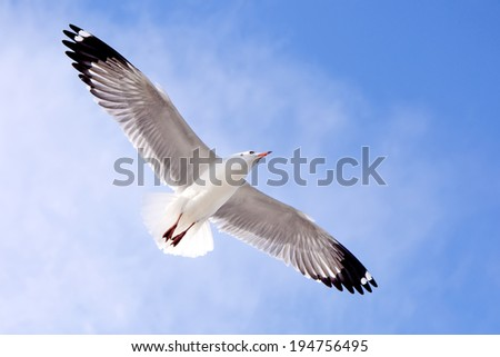 seagulls in action flying on the blue sky