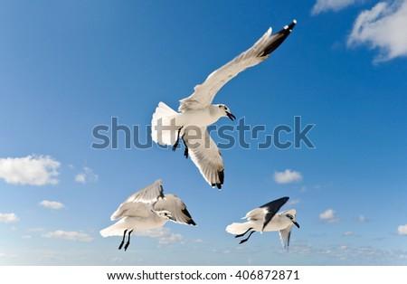 Seagulls In Flight  - stock photo