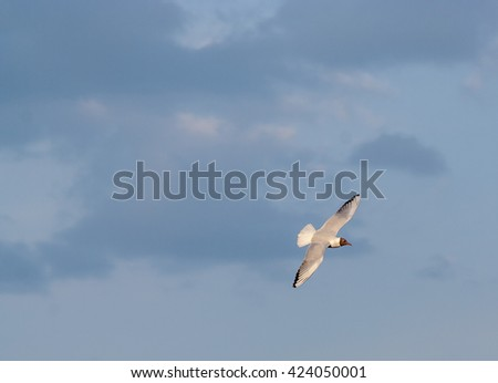 Seagulls in flight on blue sky - stock photo