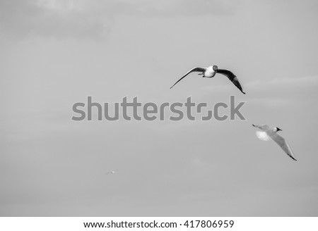 Seagulls in flight on grey sky - stock photo
