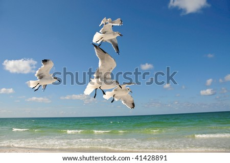 Seagulls In Flight over the Beach