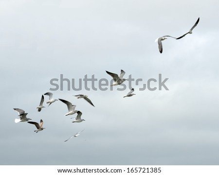 Seagulls in flight over the ocean on the east coast of Florida, USA. - stock photo