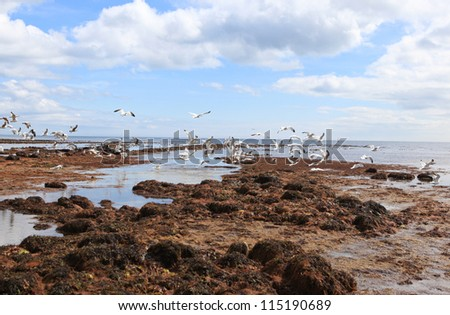 Seagulls in Lyme Regis, Dorset, UK - stock photo