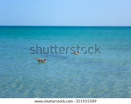 Seagulls in the black sea