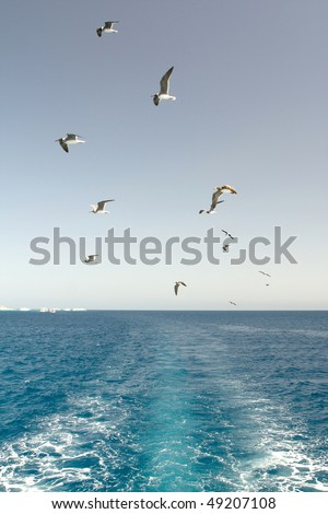 seagulls in the red sea Egypt - stock photo