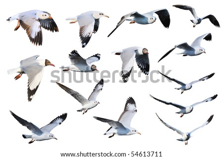 Seagulls mix - stock photo