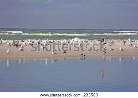 Seagulls on beach at Siesta Key