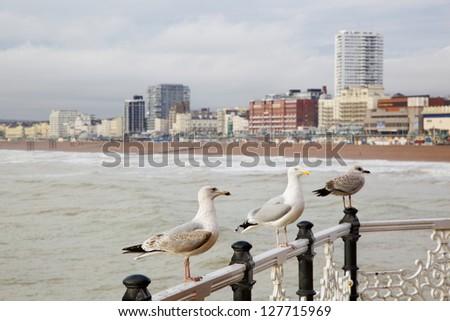 Seagulls on Brighton pier - stock photo