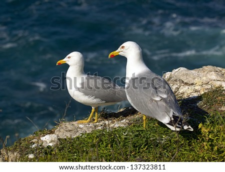 Seagulls on cliff