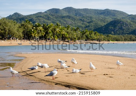 Seagulls on sandbank, Horseshoe Bay, Magnetic Island, Queensland, Australia - stock photo