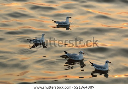 Seagulls on sea with reflection of sunlight.