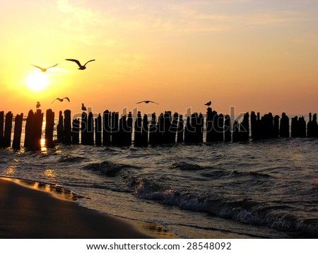 Seagulls on the sunset - stock photo