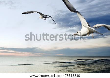 seagulls over sea at sunset - stock photo