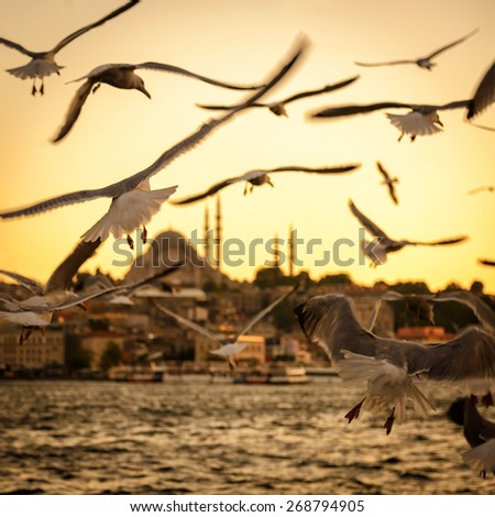 Seagulls over the Golden Horn in Istanbul at sunset, Turkey - stock photo