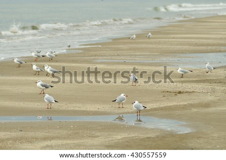 seagulls over the sand of te shoreline