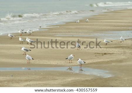 seagulls over the sand of te shoreline - stock photo