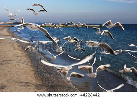 Seagulls pursue the photographer going on seacoast, in hope to receive a bread slice - stock photo
