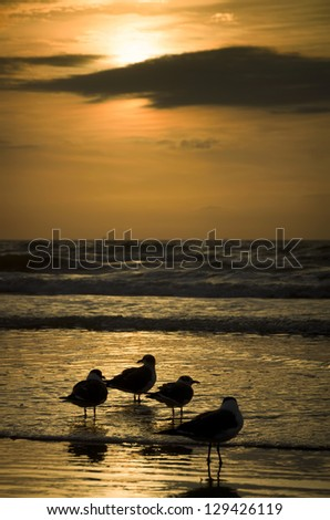 Seagulls silhouetted on a Galveston beach shortly after sunrise