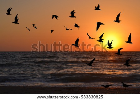 Seagulls silhouettes in flight at sunrise