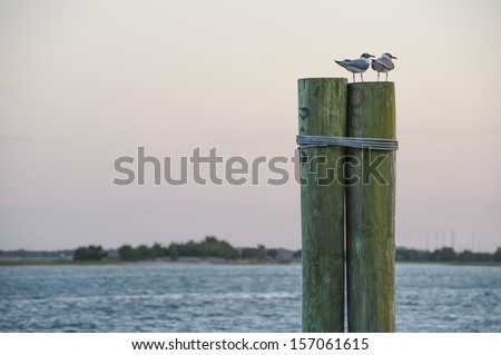Seagulls siting on a posts at the ocean dock - stock photo