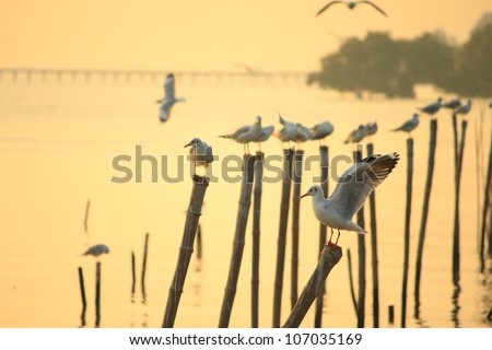 Seagulls standing on poles - stock photo