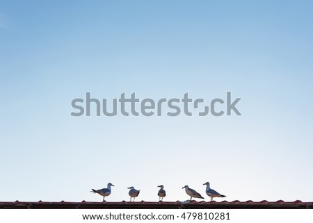 Seagulls Standing on the Roof and Listen to the Leader. Seagulls Perched on the House in a Raw with Empty Sky Copy Space.