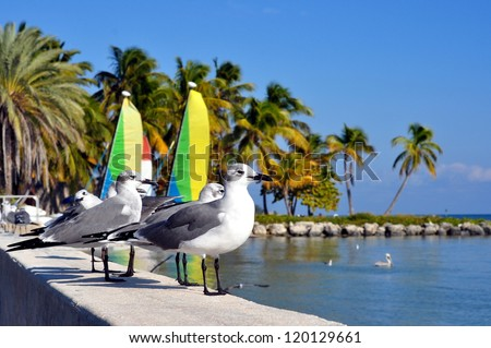 Seagulls Standing On The Seawall Of The Atlantic Ocean On Smathers Beach In Key West, Florida, With Shallow Depth Of Field - stock photo
