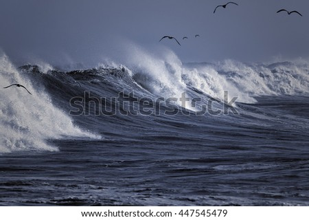 Seagulls surfing the big waves of the Portuguese coast. Focus on the waves of the foreground. - stock photo